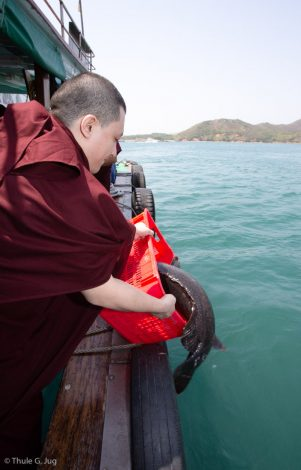 Thaye Dorje, His Holiness the 17th Gyalwa Karmapa, releases a live fish into the sea in Hong Kong harbour