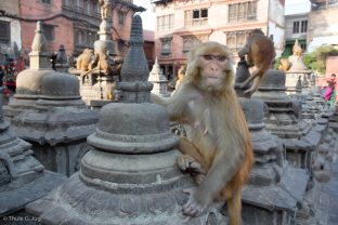 Some animal friends paid a visit during Karmapa's trip