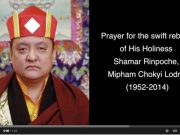 Prayer for the swift rebirth of Shamar Rinpoche video